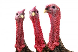 Three turkeys (head and neck only)